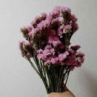 スターチス ドライフラワー ピンク(ドライフラワー)
