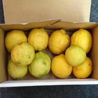 広島県産 無農薬レモン 1キロ(フルーツ)