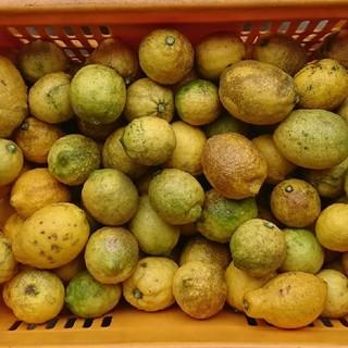 広島県産 無農薬 訳ありレモン 5キロ(フルーツ)