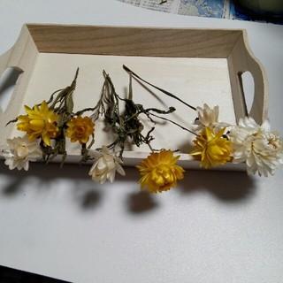 ヘリクサム茎付き ドライフラワー③(ドライフラワー)