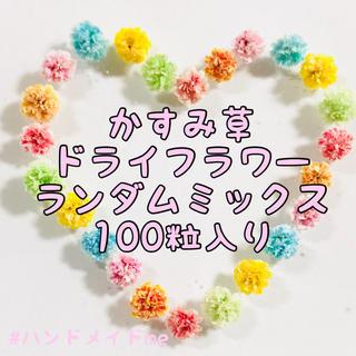 かすみ草 ドライフラワー ランダムミックスカラー100粒(ドライフラワー)