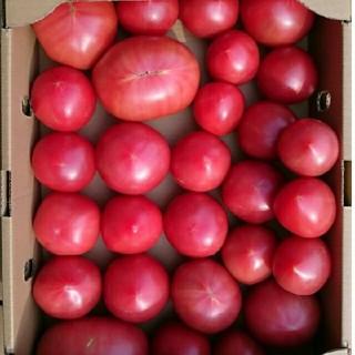 【調理用】ソムリエトマト4㎏(18玉~36玉)(野菜)