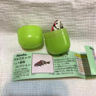 フルタセイカ(フルタ製菓)のチョコエッグ 錦鯉 三色  未組立品 (模型/プラモデル)