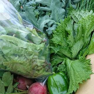 【完全無農薬】新鮮お野菜詰め合わせ  ご予約分(野菜)