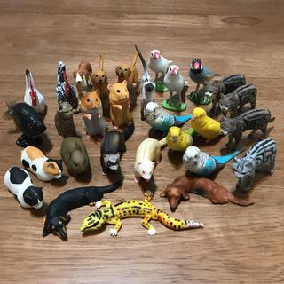 フルタセイカ(フルタ製菓)のチョコエッグ ペット動物コレクション (模型/プラモデル)