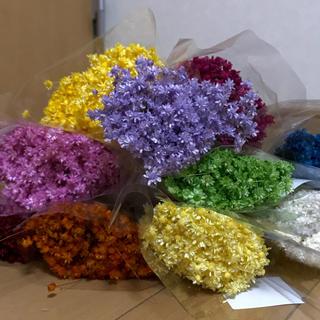 スターフラワー ミニ・マルセラ 100本 花材 ドライフラワー (ドライフラワー)
