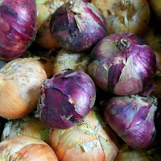 無農薬*赤白新玉ねぎ 2kg(野菜)