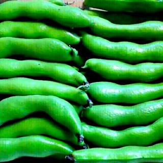 【B級品限定一箱】無農薬*空豆+赤白新玉ねぎ セット(野菜)
