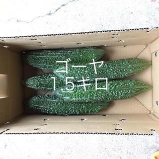 鹿児島産ゴーヤ1.5キロ^_^(野菜)
