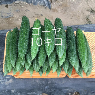 鹿児島産ゴーヤ10キロ^_^(野菜)