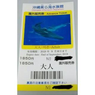 美ら海水族館チケット・大人券2枚(水族館)