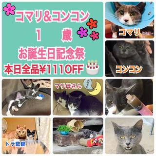 保護猫誕生日イベント開催中!!リピーター続出!絶品ブランド西瓜3L1玉