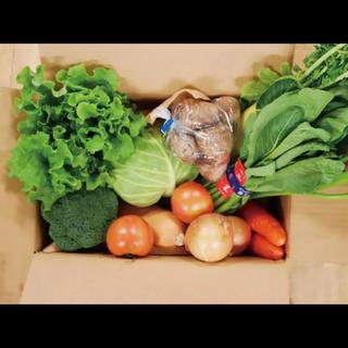茨城県産 新鮮野菜 セット