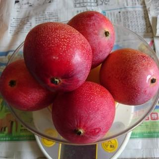 農家直送家庭用完熟マンゴー1キロ(フルーツ)
