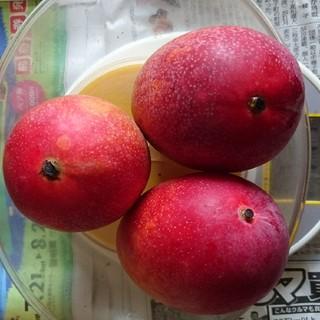 農家直送訳あり完熟マンゴー(約700g)(フルーツ)