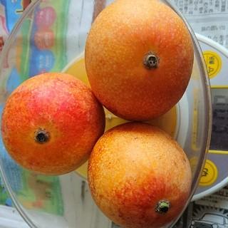 農家直送訳有り完熟マンゴー(600g)(フルーツ)