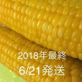 トウモロコシ とうもろこし(野菜)
