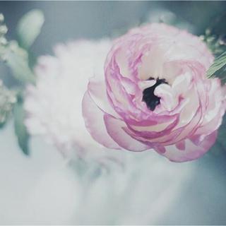ジルサンダー(Jil Sander)のさきこ様専用出品(シャツ/ブラウス(長袖/七分))