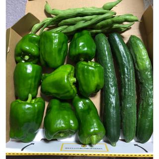 無農薬野菜詰め合わせ  ピーマン  きゅうり いんげん