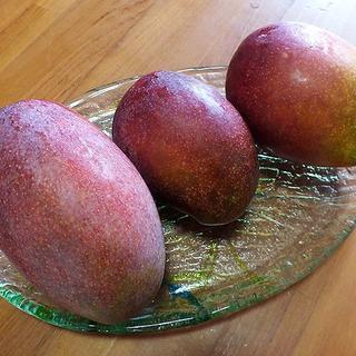 沖縄産規格外扱いアップルマンゴー約1キロ|ミニマンゴーとの同梱購入にいかが?(フルーツ)