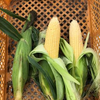 ゴールドラッシュ14本(野菜)