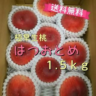 本日まで!極早生桃「はつおとめ」1.5kg送料無料【特別栽培】福島市