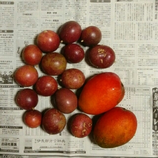 マンゴー&パッションフルーツ(フルーツ)