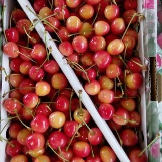 訳アリ!山形県産さくらんぼ【佐藤錦】1kg バラ(フルーツ)