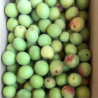 農薬未使用  梅  6/22 収穫   3キロ(フルーツ)