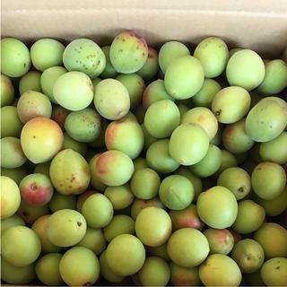 農薬未使用   梅  6/22収穫  6キロ(フルーツ)