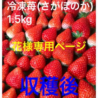 冷凍苺 さがほのか1.5kg(フルーツ)