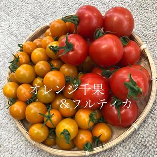 オレンジ千果&フルティカ 1キロ(野菜)