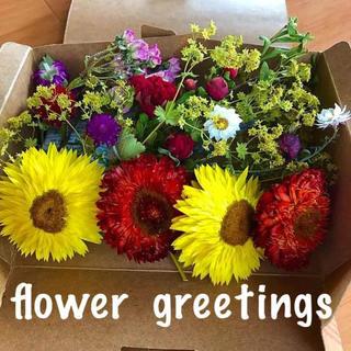 ドライフラワー  花材 素材 ボタニカル アレンジメント用(ドライフラワー)