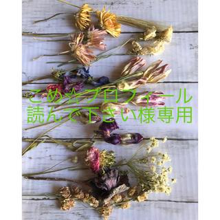 春の花のボタニカルフラワーセット2  こめ☆プロフィール読んでほしい様専用。(ドライフラワー)