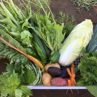 無農薬野菜 セット多品種 ちょっとづつ (野菜)