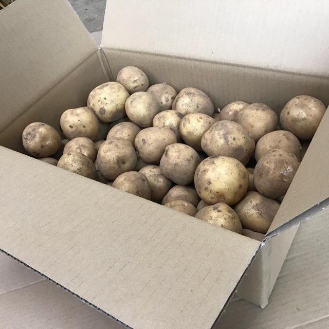 6/26又は29発送限定、掘り立て新じゃがいも「キタアカリ5kg」 食品/飲料/酒の食品(野菜)の商品写真