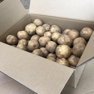 6/26又は29発送限定、掘り立て新じゃがいも「キタアカリ5kg」(野菜)