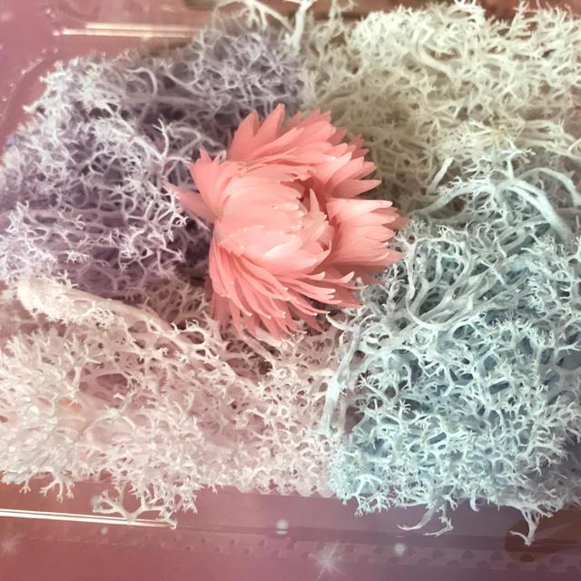 ミルキーカラーモスセット☆シルバーデイジー付き ハンドメイドのフラワー/ガーデン(ドライフラワー)の商品写真