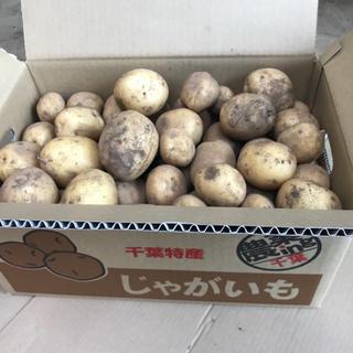 6/29発送限定、掘り立て新じゃがいも「キタアカリ10kg」(野菜)