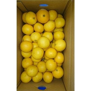 小夏 高知県産 SSサイズ 5kg ご家庭用 温室(フルーツ)