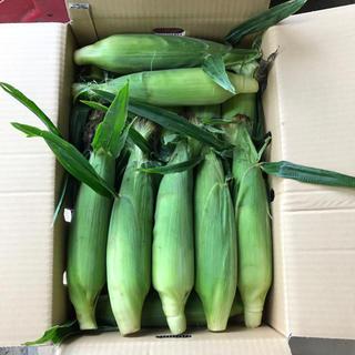 ゴールドラッシュ14本2箱(野菜)