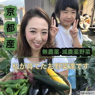 新鮮朝採り野菜詰め合わせ!京都産(野菜)