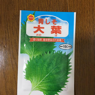 大葉の種(野菜)