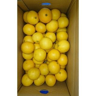 ●ぴゆあlovely様専用●小夏 高知県産 SSサイズ 5kg ご家庭用 温室(フルーツ)