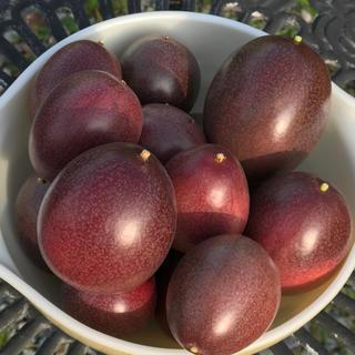 パッションフルーツ 【値下】送料込み  1kg   今年の出品もあと少し!(フルーツ)