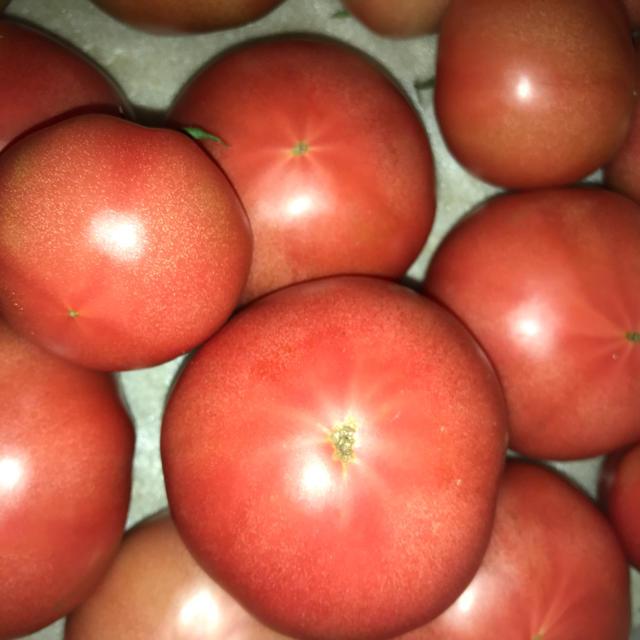 トマト、ピーマン、ナス 食品/飲料/酒の食品(野菜)の商品写真