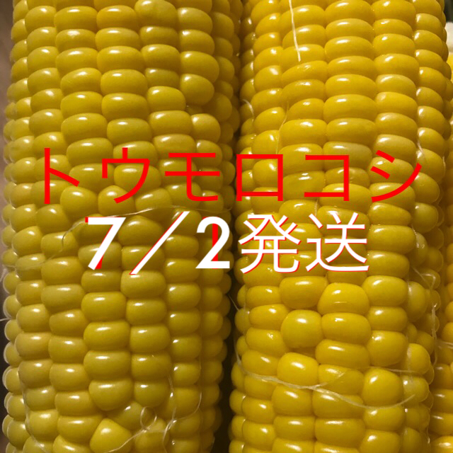 トウモロコシ 食品/飲料/酒の食品(野菜)の商品写真