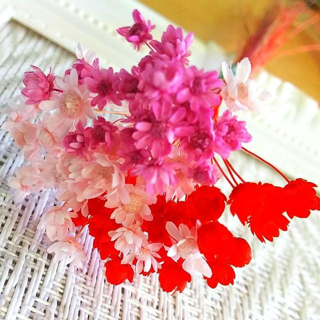 スターフラワーミニ・3色セット ハンドメイドのフラワー/ガーデン(ドライフラワー)の商品写真