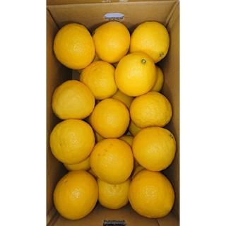 小夏 高知県産 2Lサイズ 5kg ご家庭用 温室(フルーツ)