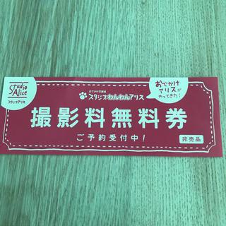 撮影料3240円★スタジオわんわんアリス★撮影料無料券